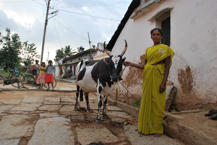 Sugunamma with her cow in her street in the village of Yeluvahalli, two hours from Bangalore. Photo: Danielle Batist